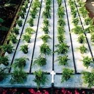 Capillary Irrigation Matting