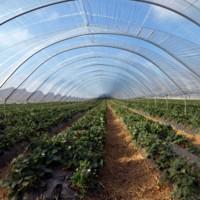 Greenhouse Supplies