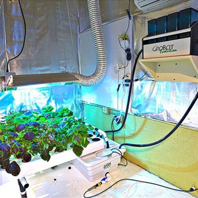 Indoor Growing and Hydroponics